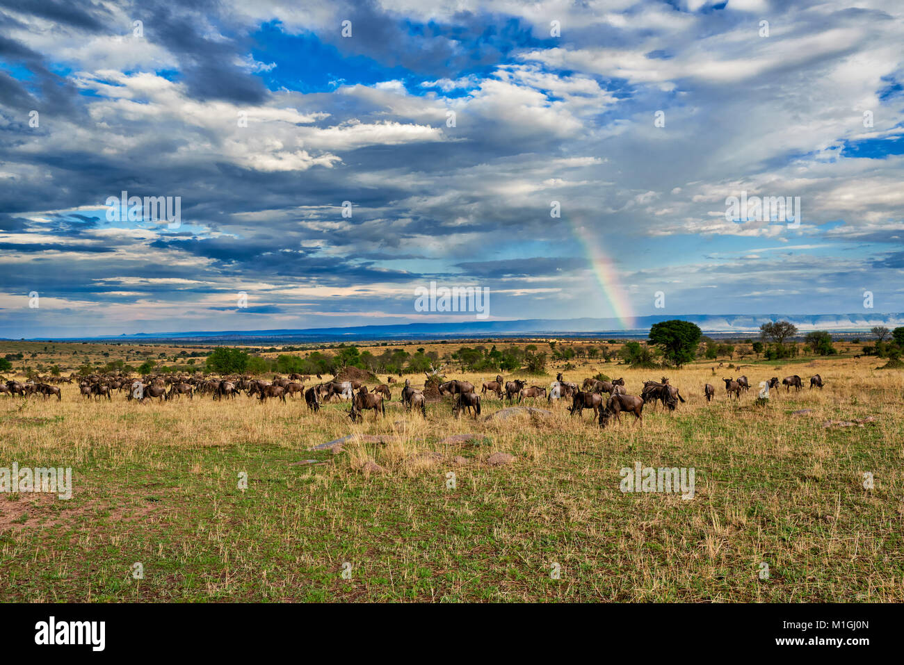 rainbow and wildebeest, landscape in Serengeti National Park, UNESCO world heritage site, Tanzania, Africa - Stock Image