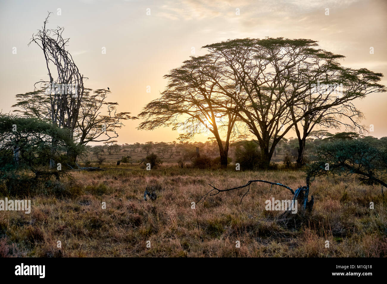 sunrise in Serengeti National Park, UNESCO world heritage site, Tanzania, Africa - Stock Image