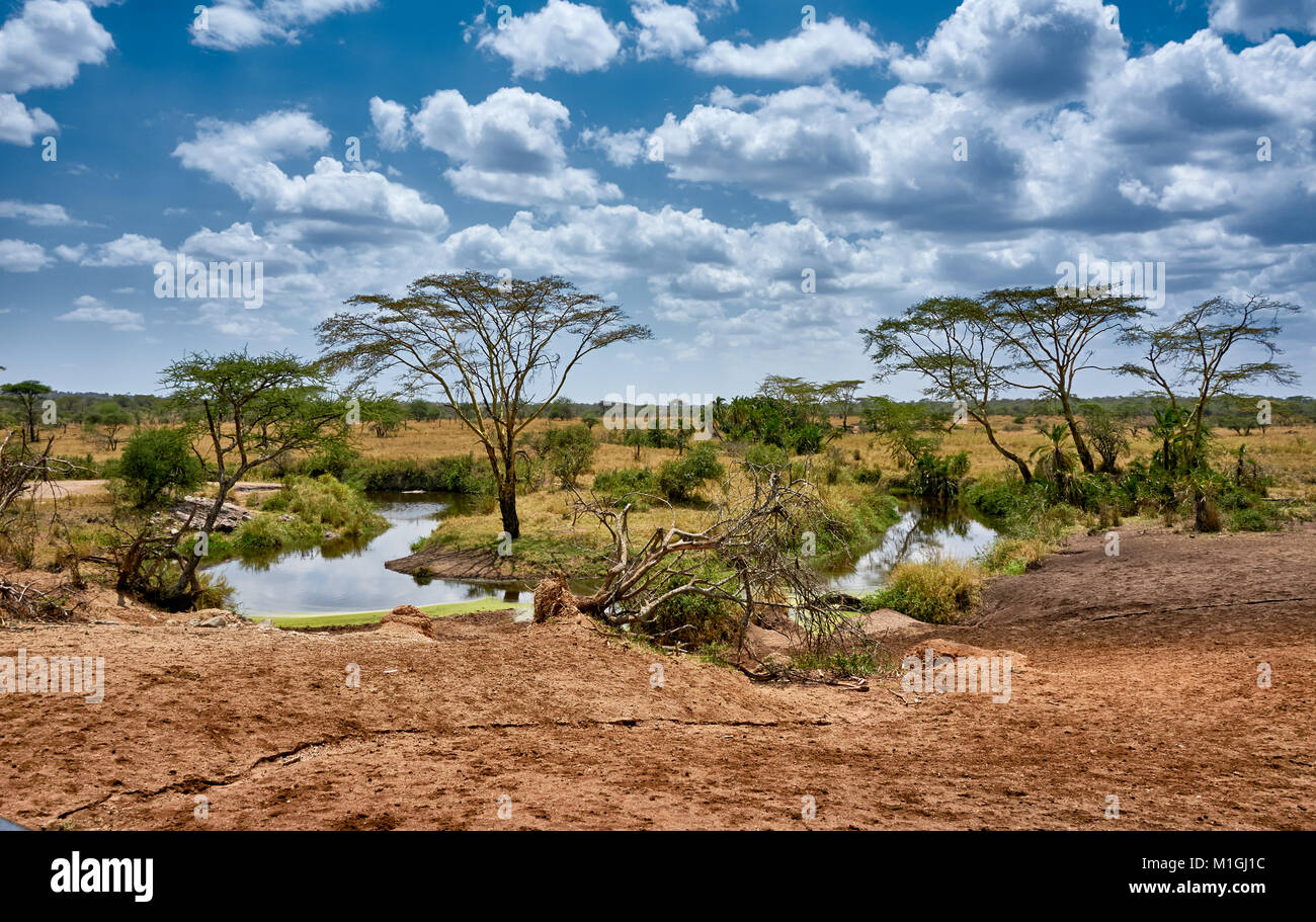 landscape in Serengeti National Park, UNESCO world heritage site, Tanzania, Africa Stock Photo