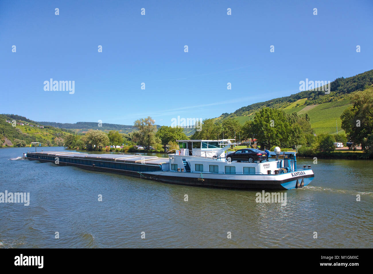 Freighter on Moselle river at Traben-Trarbach, Moselle river, Rhineland-Palatinate, Germany, Europe - Stock Image