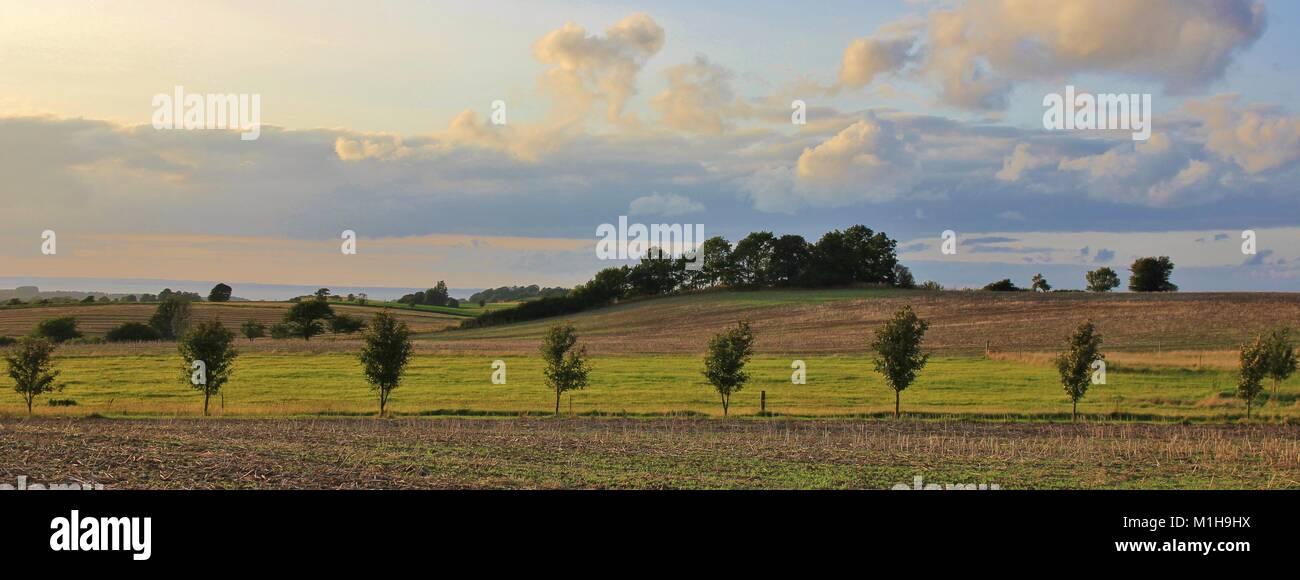 Striped landscape in Zealand, Denmark. Fields covering hills. Rural summer scene. - Stock Image