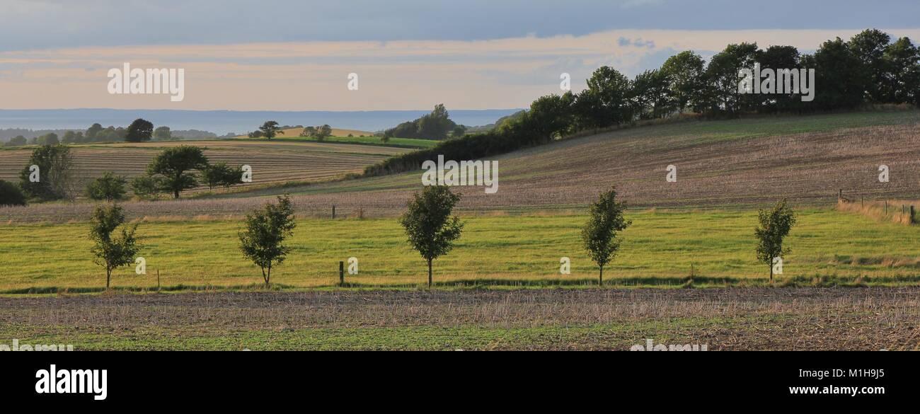 Rural summer scene in Denmark. - Stock Image