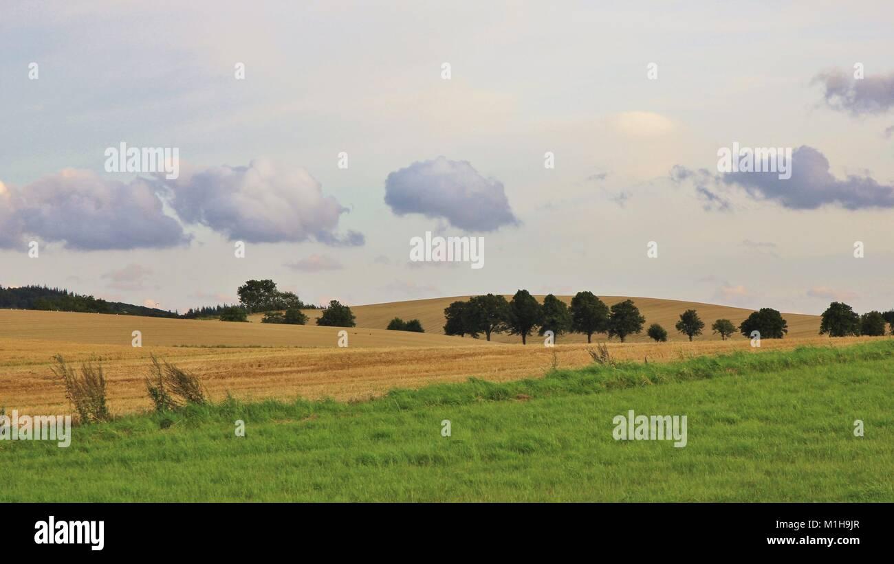 Green meadow and field in Zealand, Denmark. Rural summer scene. - Stock Image