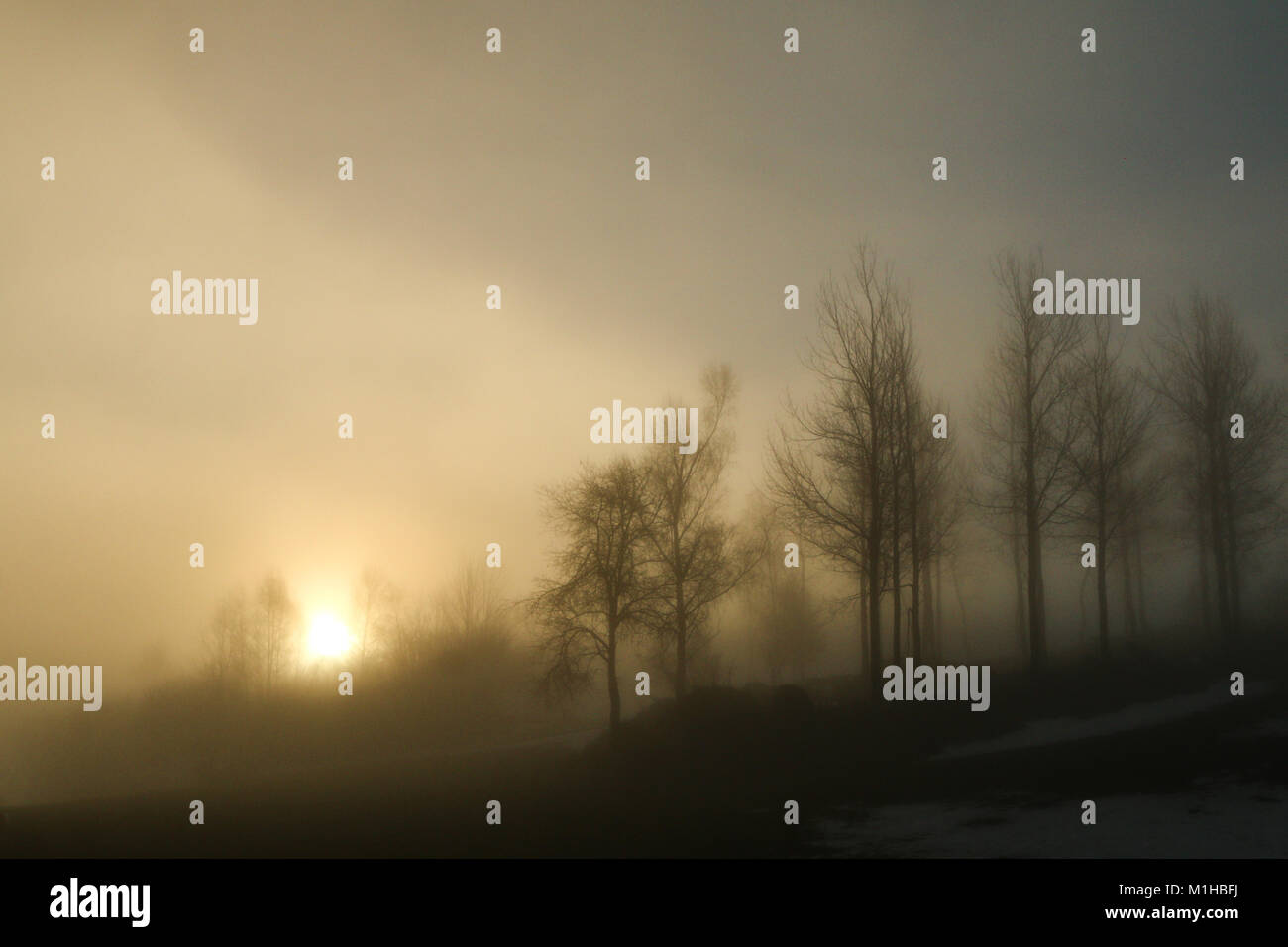 A picture of some trees on a small hill standing in the morning mist. Look mysterious and enigmatic. Stock Photo
