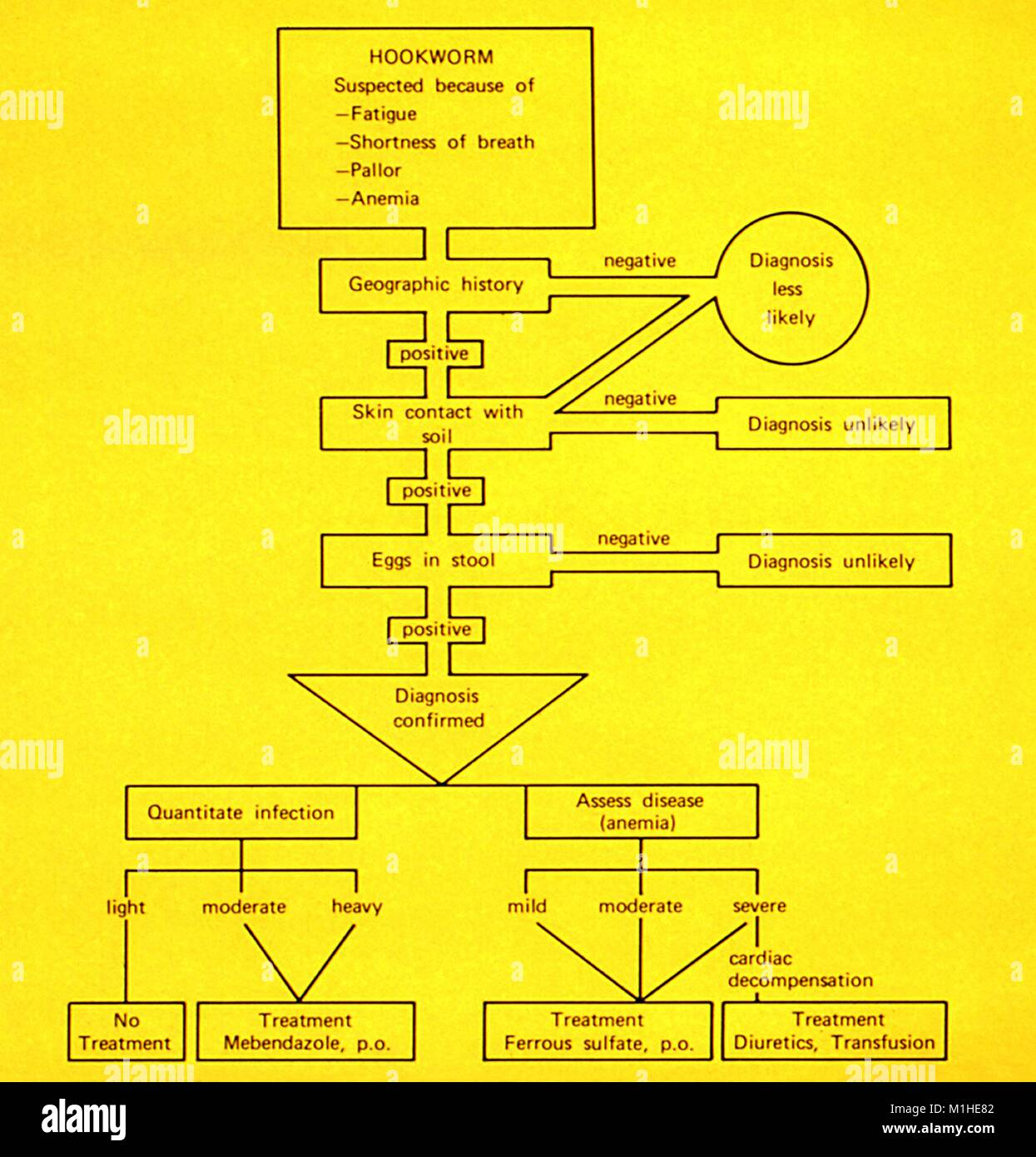 Hookworm infections diagnostic algorithm depicted in the illustrated diagram, 1986. Image courtesy Centers for Disease - Stock Image