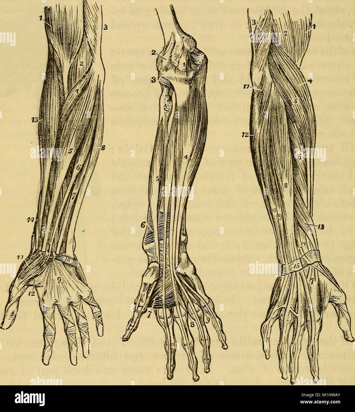 History Of Anatomy Stock Photos & History Of Anatomy Stock Images ...