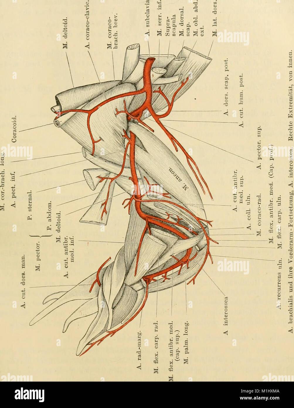 Charmant Anatomie Einer Modellzelle Fotos - Anatomie Von ...