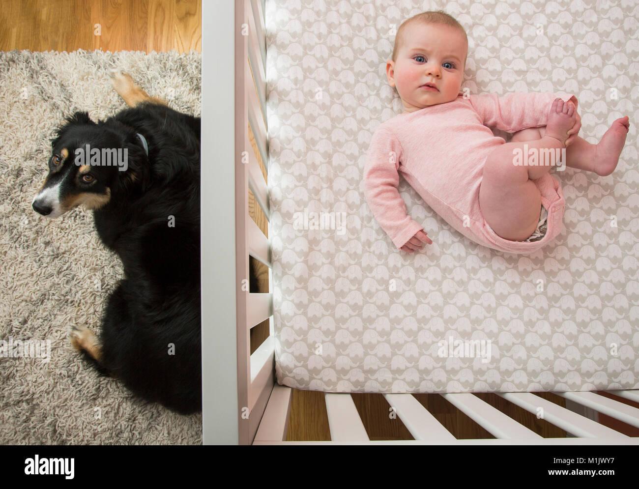 Crib Animal Stock Photos Amp Crib Animal Stock Images Alamy