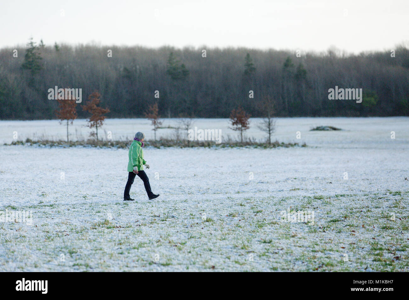 Woman enjoying a morning walk through covered in snow Castletown fields, Celbridge, County Kildare, Ireland - Stock Image