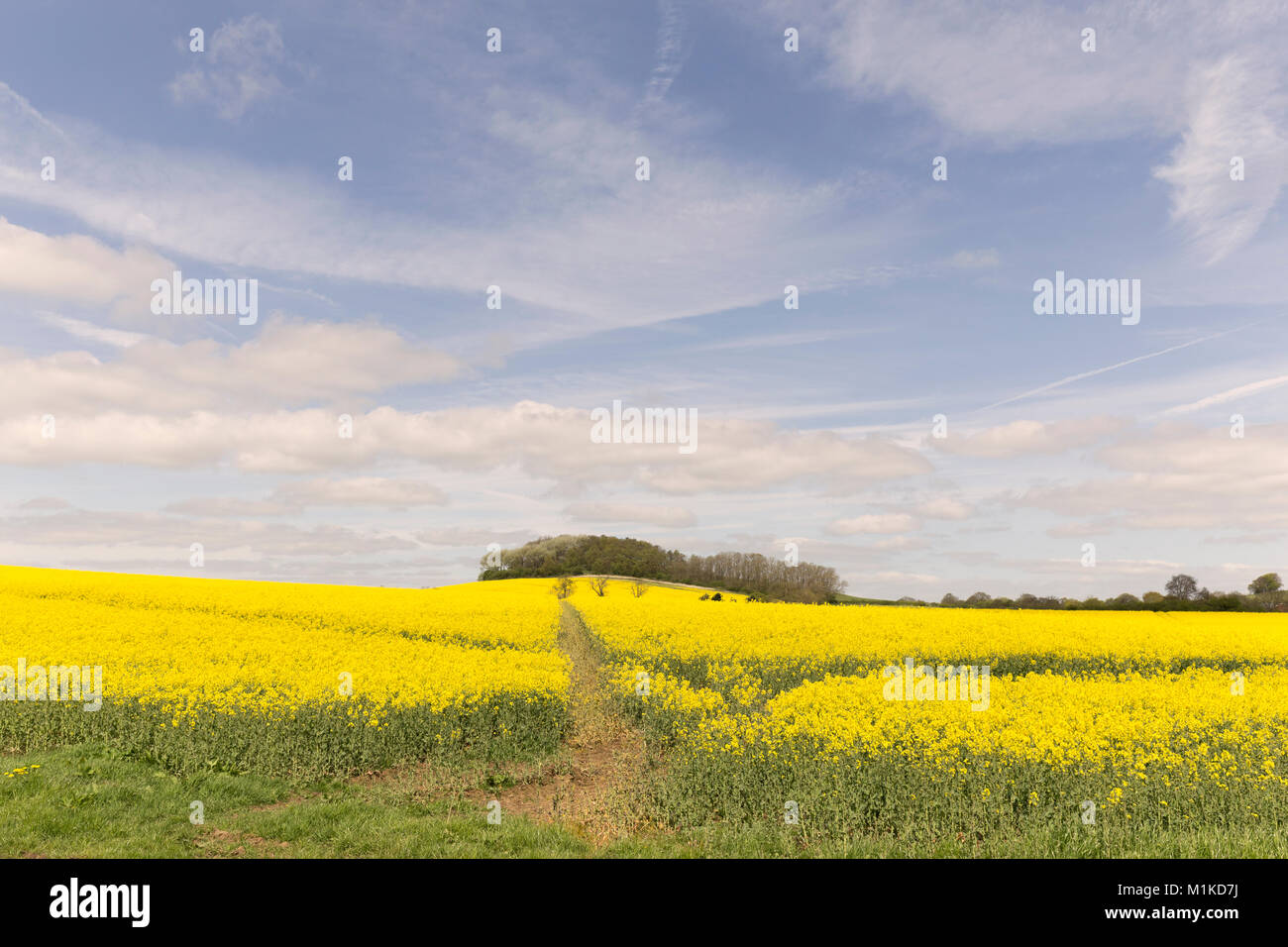 Beautiful Leicestershire countryside,shot on a spring day over a field of rapessed flowers. - Stock Image
