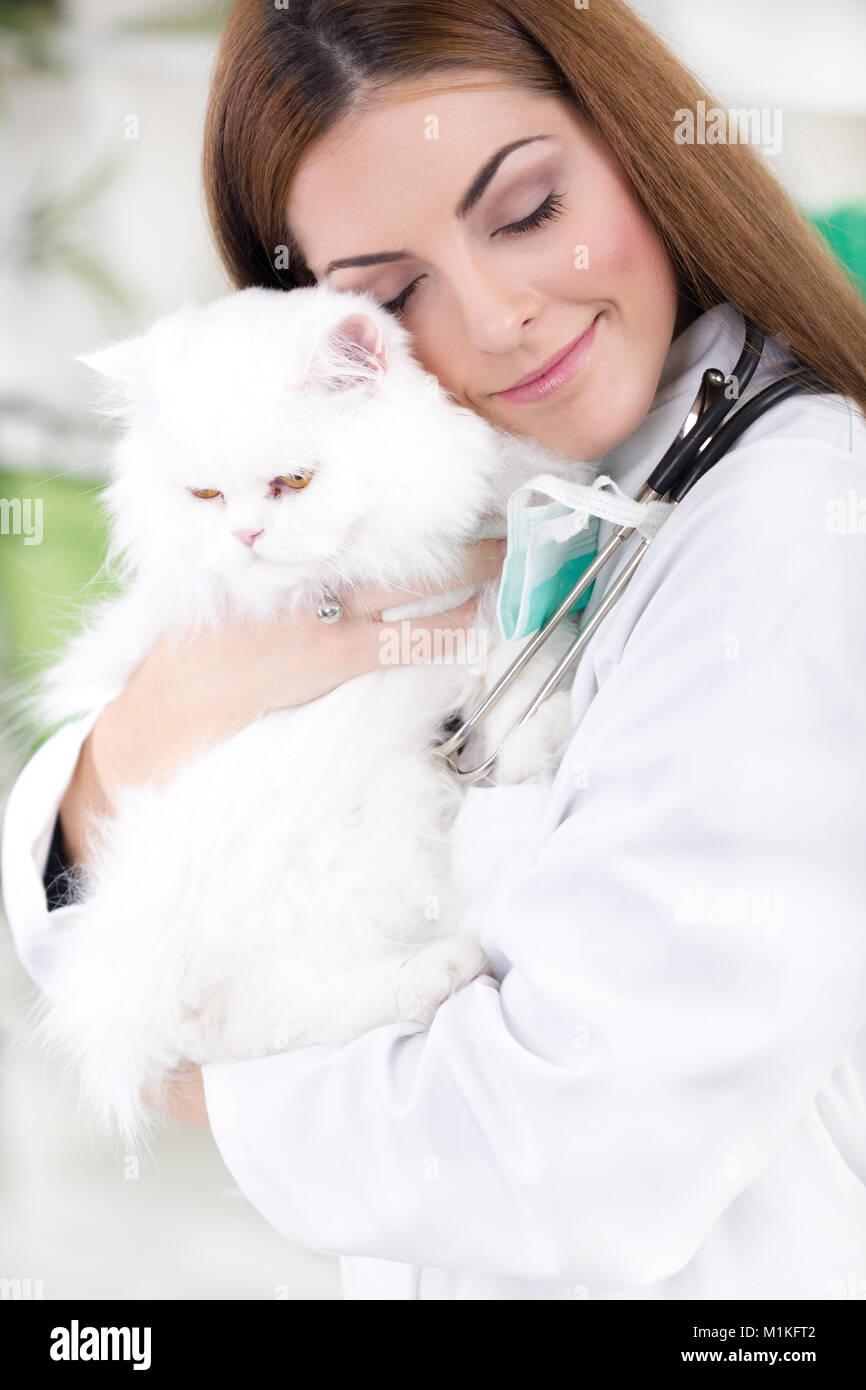 young female vet hugging white Persian cat - Stock Image