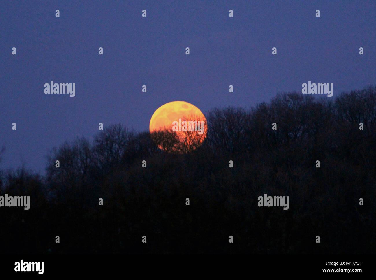 Blue moon super full moon rises over tree tops near Wells, Somerset, UK on 31st January 2018. - Stock Image