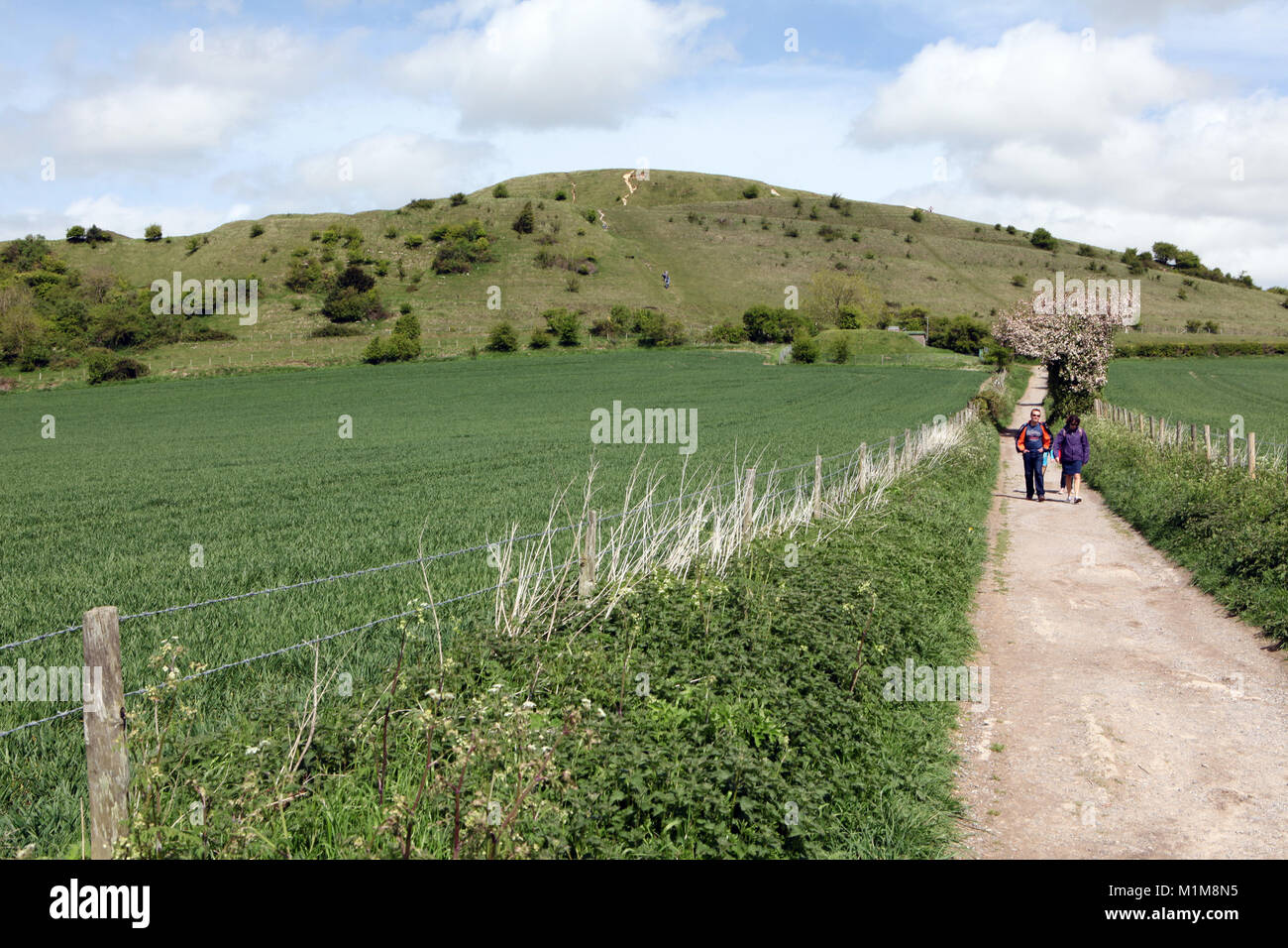 Cley Hill near Longleat in Wiltshire. A popular West Country walk for families in the UK. - Stock Image