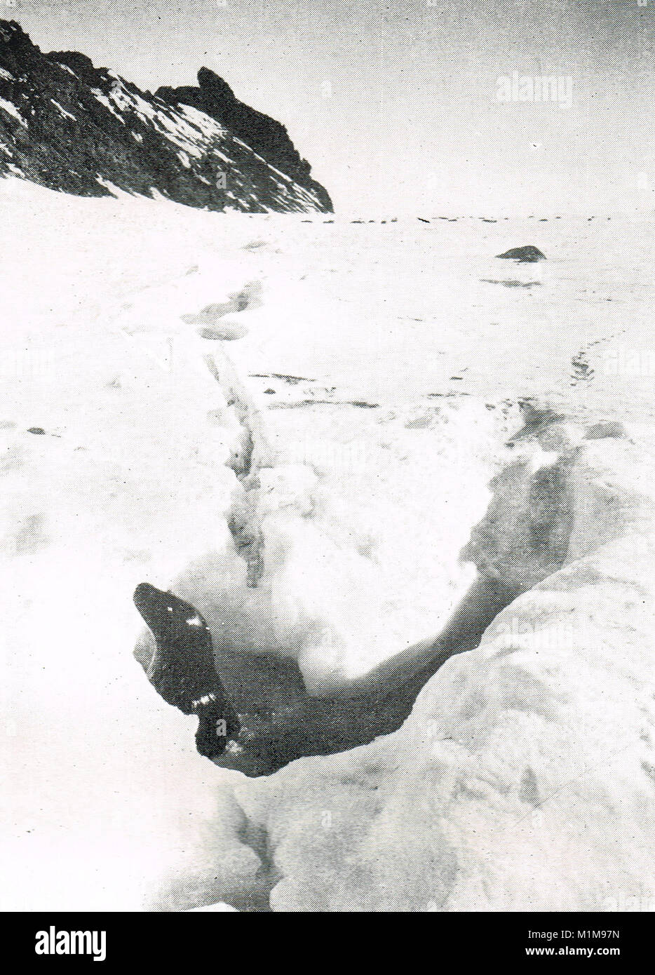 Seal peering out of a tide crack, Razorback Island, Antarctica, 1911, Scott's final expedition - Stock Image