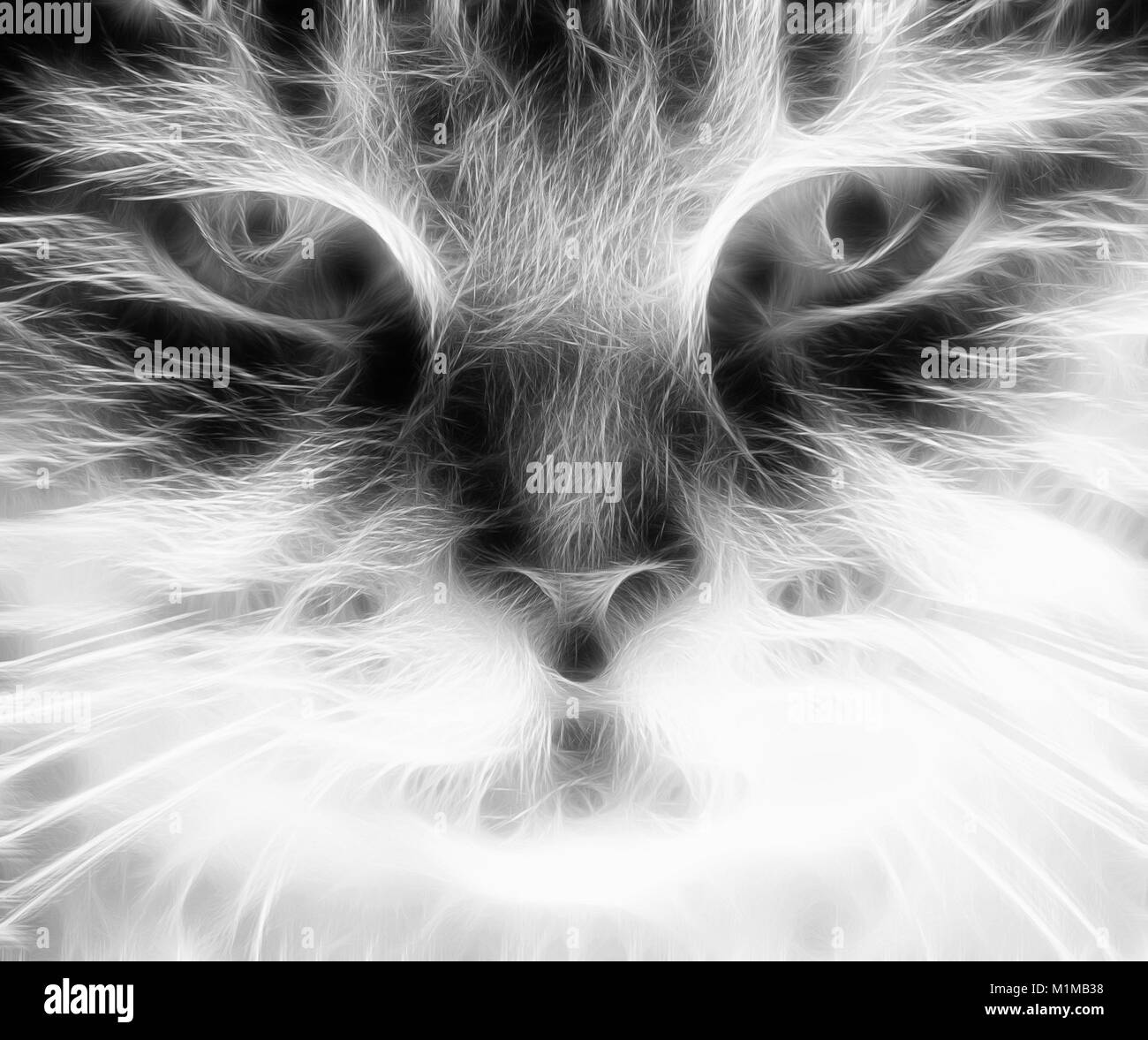 black and white abstract fractal cat portrait - Stock Image