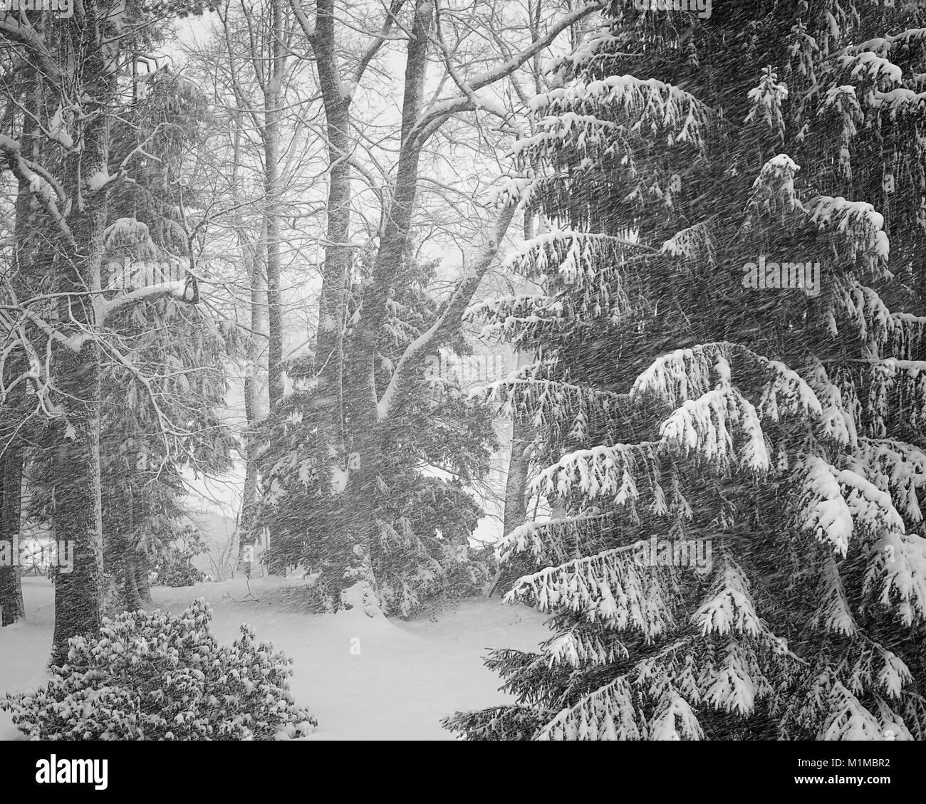 DE - BAVARIA: Wintertime at Bad Toelz - Stock Image