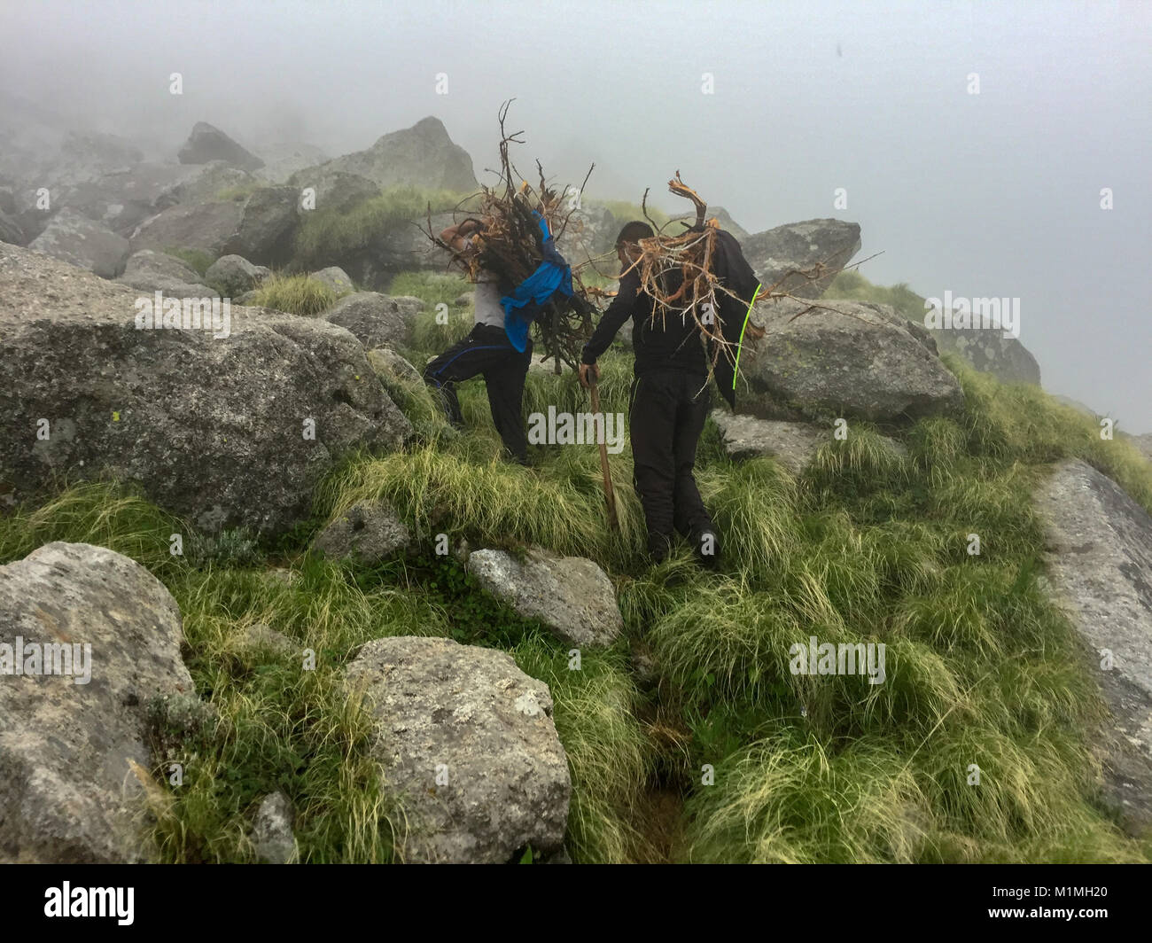 Collecting woods for camping in Himalayas during the trek - Stock Image