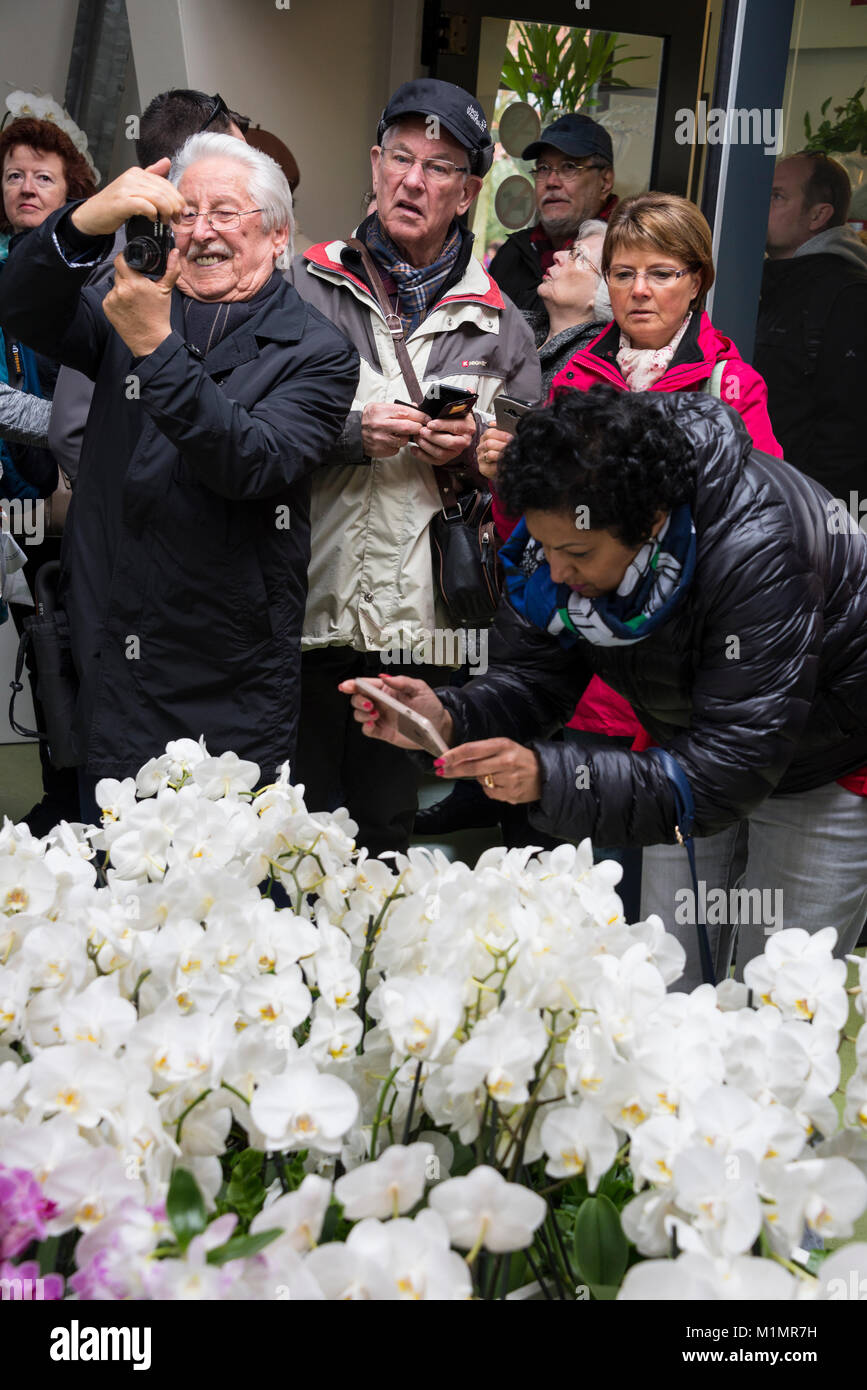 A group of visitors taking photographs of orchids in the Beatrix Pavilion at Keukenhof in Holland.  The name, 'Keukenhof' - Stock Image