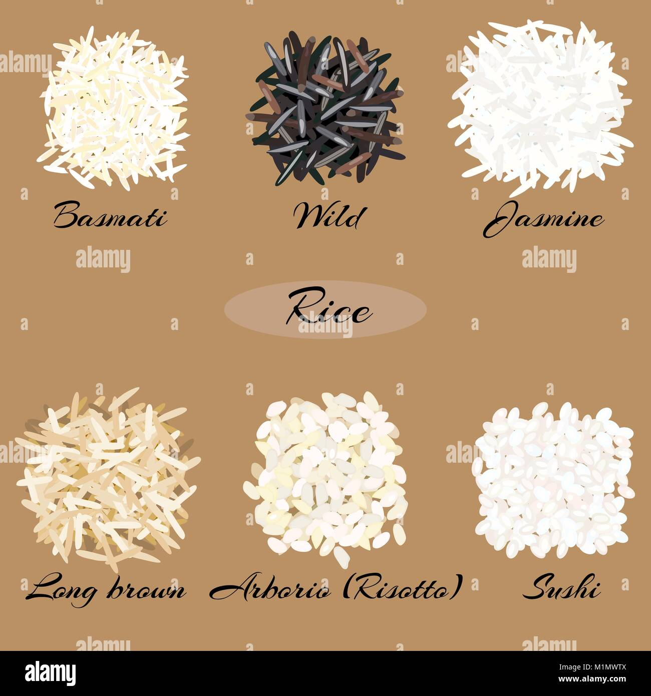 Different types of rice. - Stock Vector