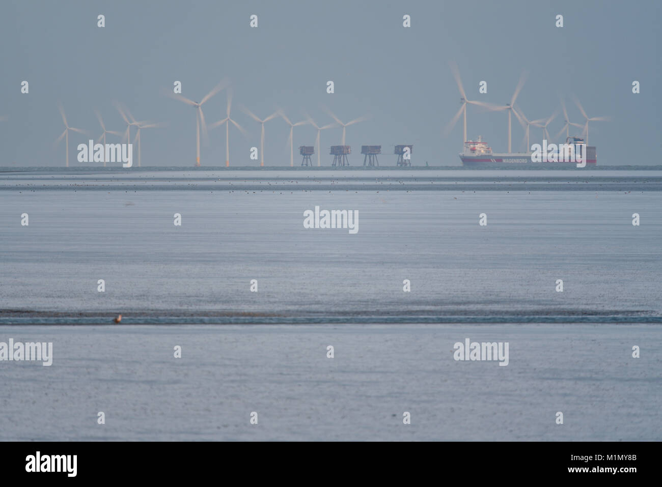 Kentish Flats Offshore Wind Farm and Red Sands Maunsell Forts in the mouth of the Thames Estuary off the Essex and - Stock Image
