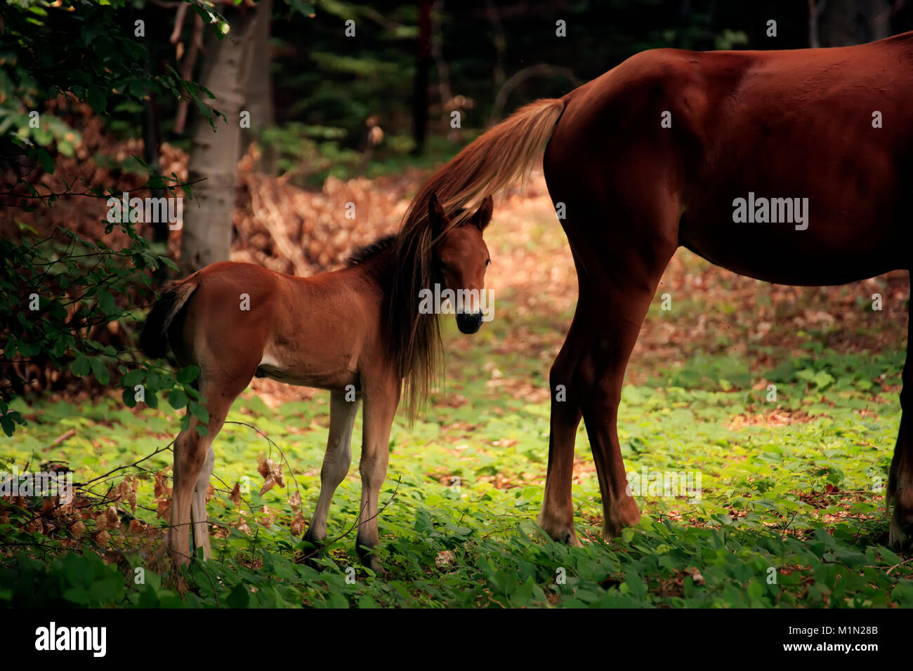 Baby Horse And His Mother In Sunny Forest Stock Photo Alamy