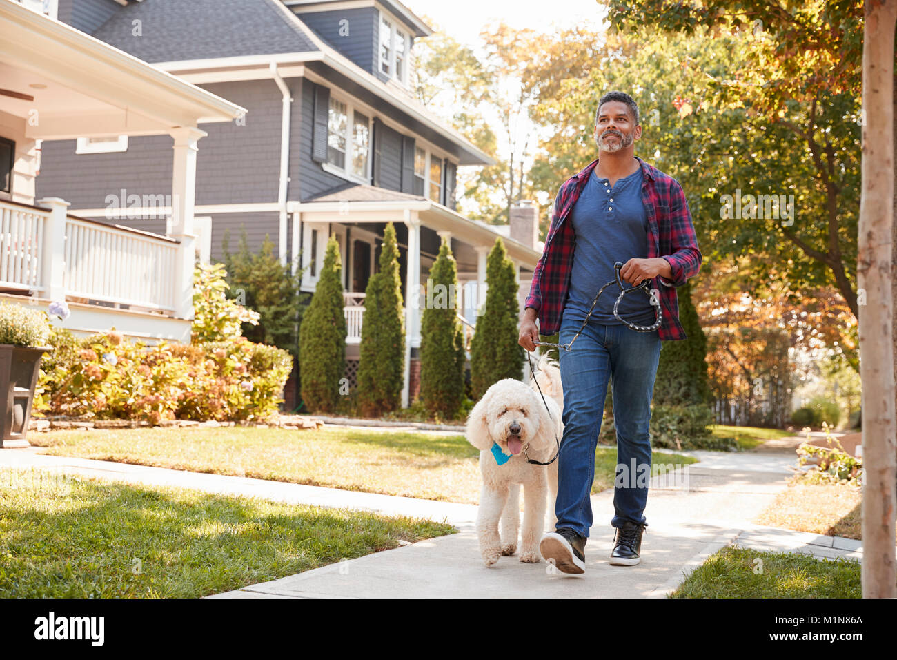 Man Walking Dog Along Suburban Street - Stock Image