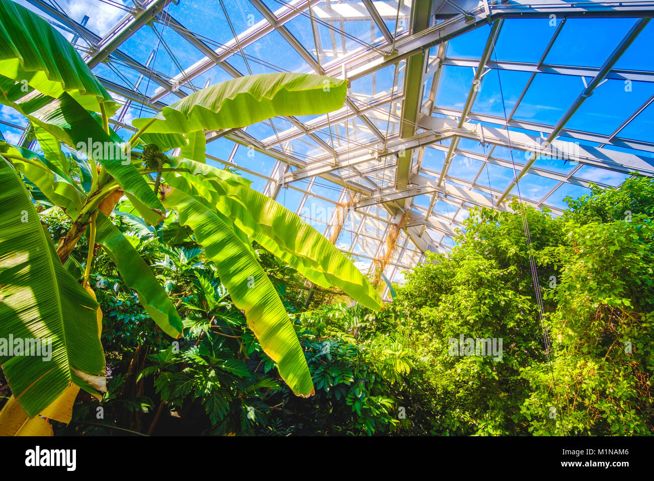 modern greenhouse interior glass building inside design - Stock Image