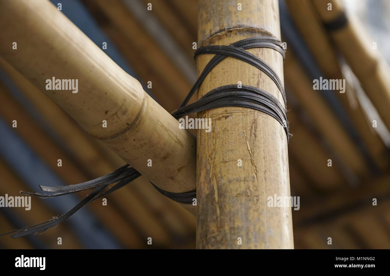 Scaffolding in Hong Kong is basically made of bamboo. Nature constantly supplies new material. (08 January 2016) - Stock Image