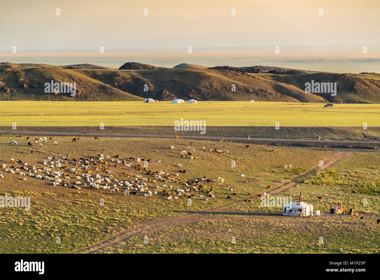 Nomadic camp and livestock, Bayandalai district, South Gobi province, Mongolia, Central Asia, Asia - Stock Image