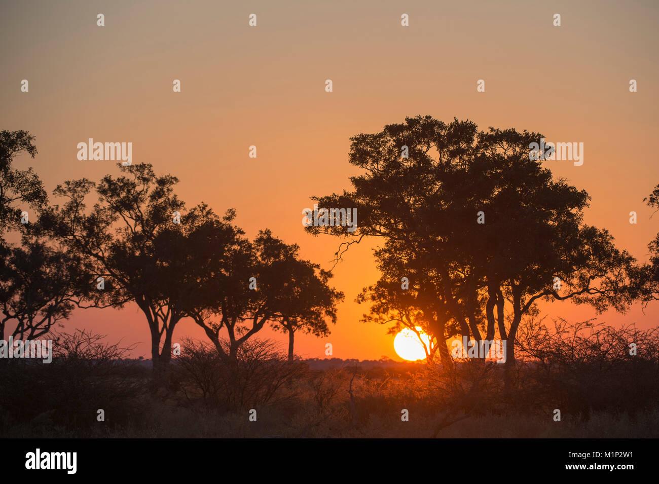 Sunset in the Savuti marsh, Botswana, Africa Stock Photo