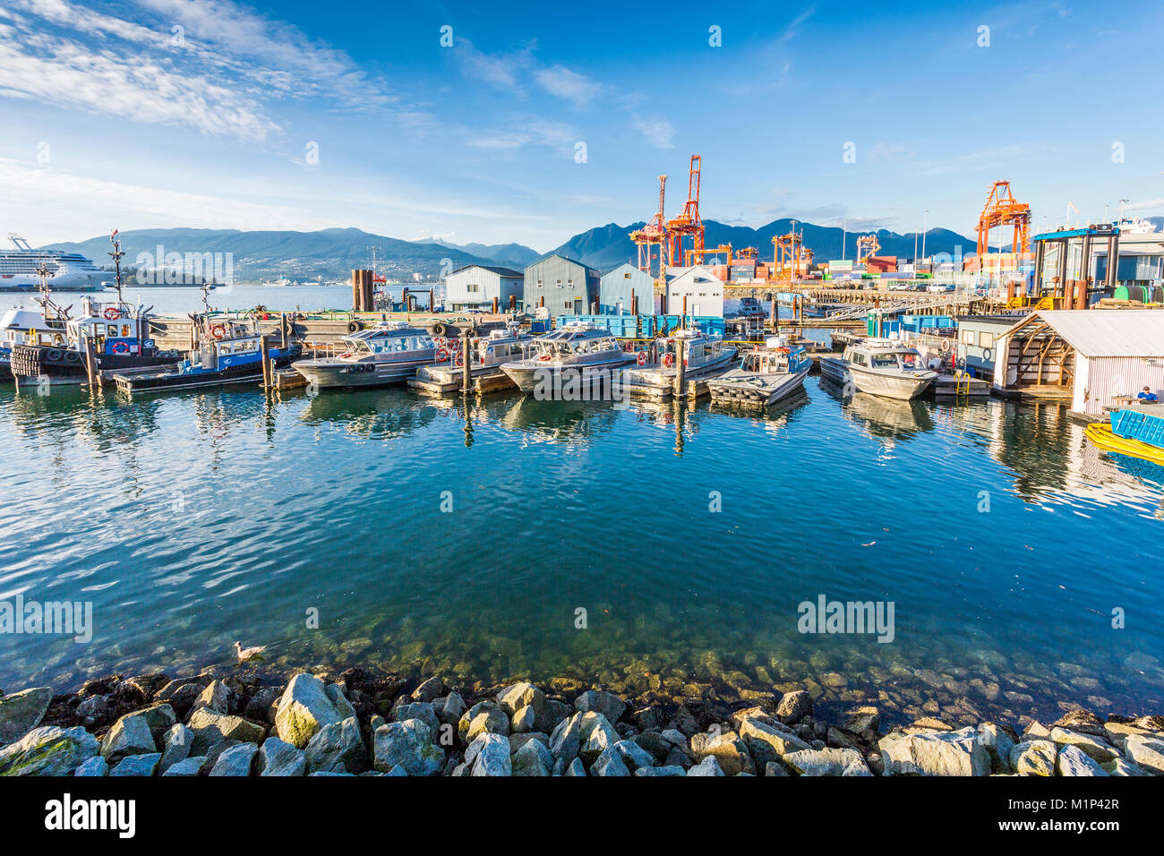View of cruise ship and boats moored in harbour near CRAB Park at Portside, Vancouver, British Columbia, Canada, - Stock Image