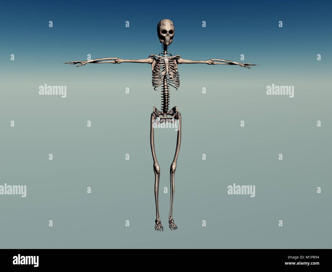 Female Skeleton Stock Photos Female Skeleton Stock Images Alamy