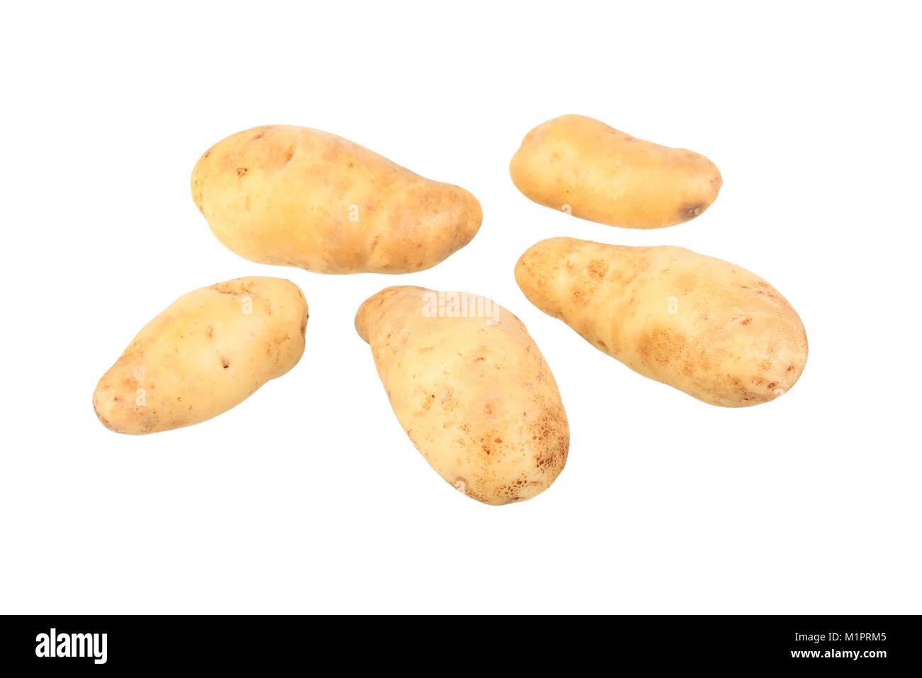 Potato Variety de la rat Ardeche, free plates, Kartoffelsorte La Ratte de Ardeche, Freisteller Stock Photo