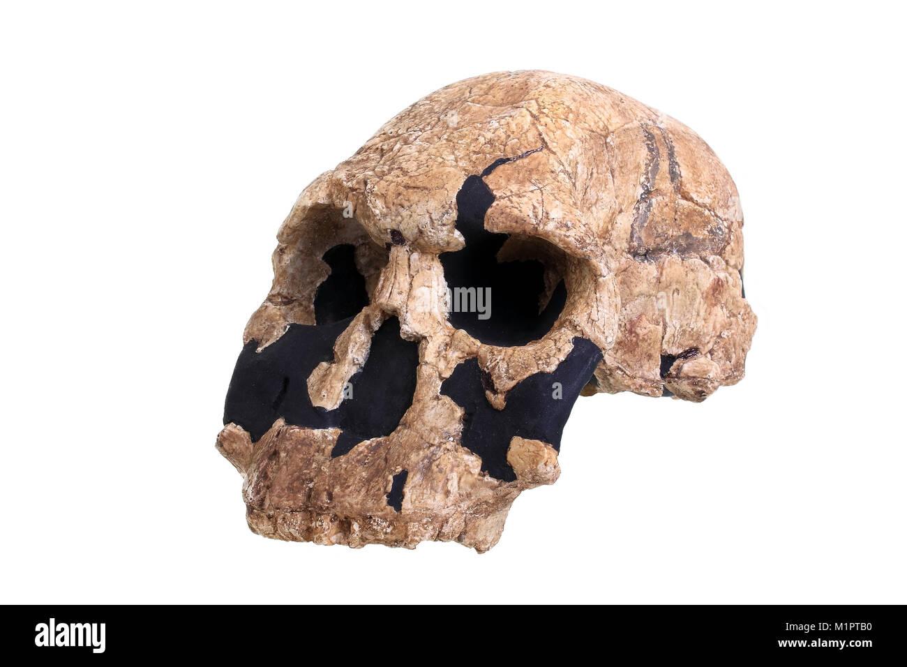 Human Evolution Natural History Museum London