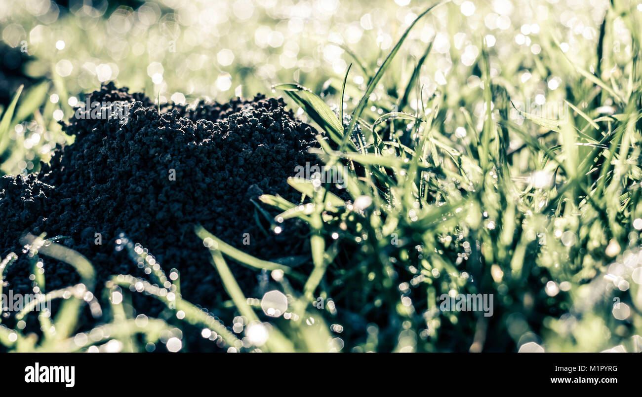 Anthill in the grass - Stock Image