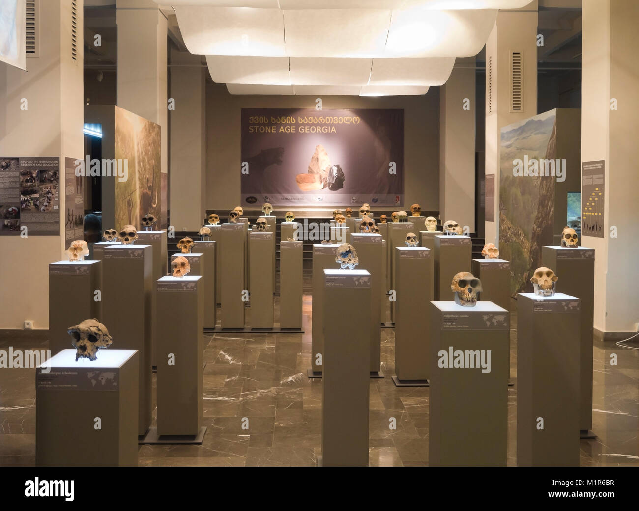 Georgian National Museum in he capital Tbilisi has many different exhibitions, Stone age Georgia with sculls from - Stock Image