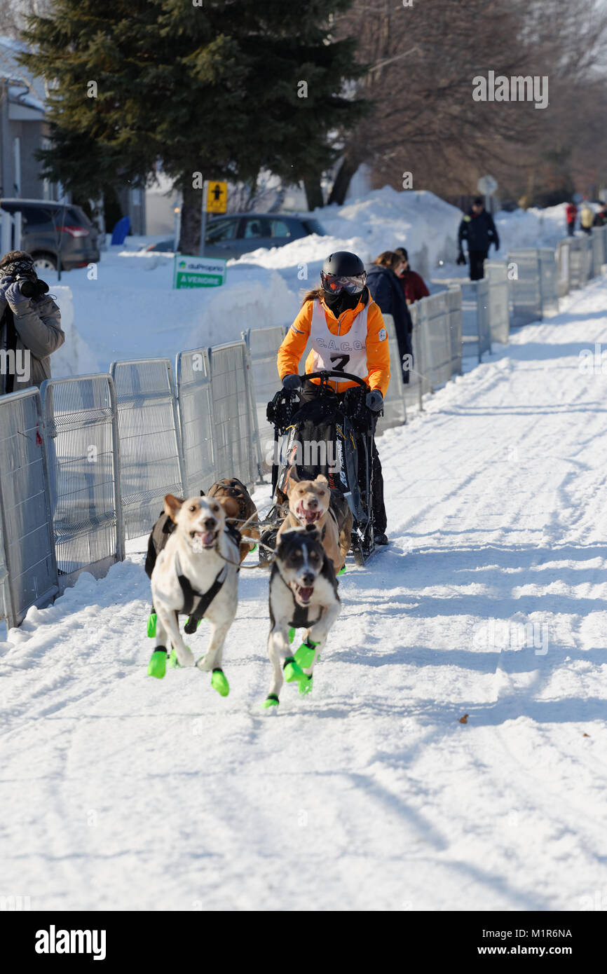 L'Epiphanie, Canada 1/28/2018 . A musher and her team of dogs race in tthe International Dog sled Race of Lanaudiere, - Stock Image