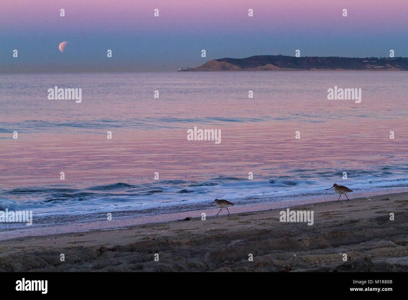 Coronado, California, USA. 31st Jan, 2018. The Rare Trifecta occurred early this morning. We had a Super, Blue, Stock Photo