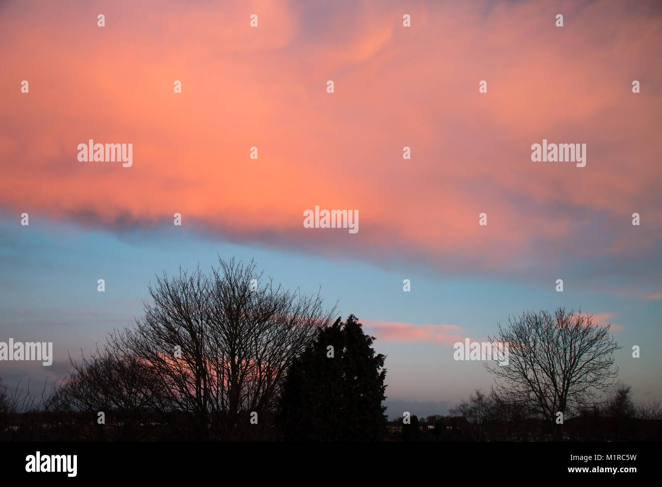 Kidderminster, UK. 1st February, 2018. UK weather: with the January blues now out of the way, amazingly pink early - Stock Image