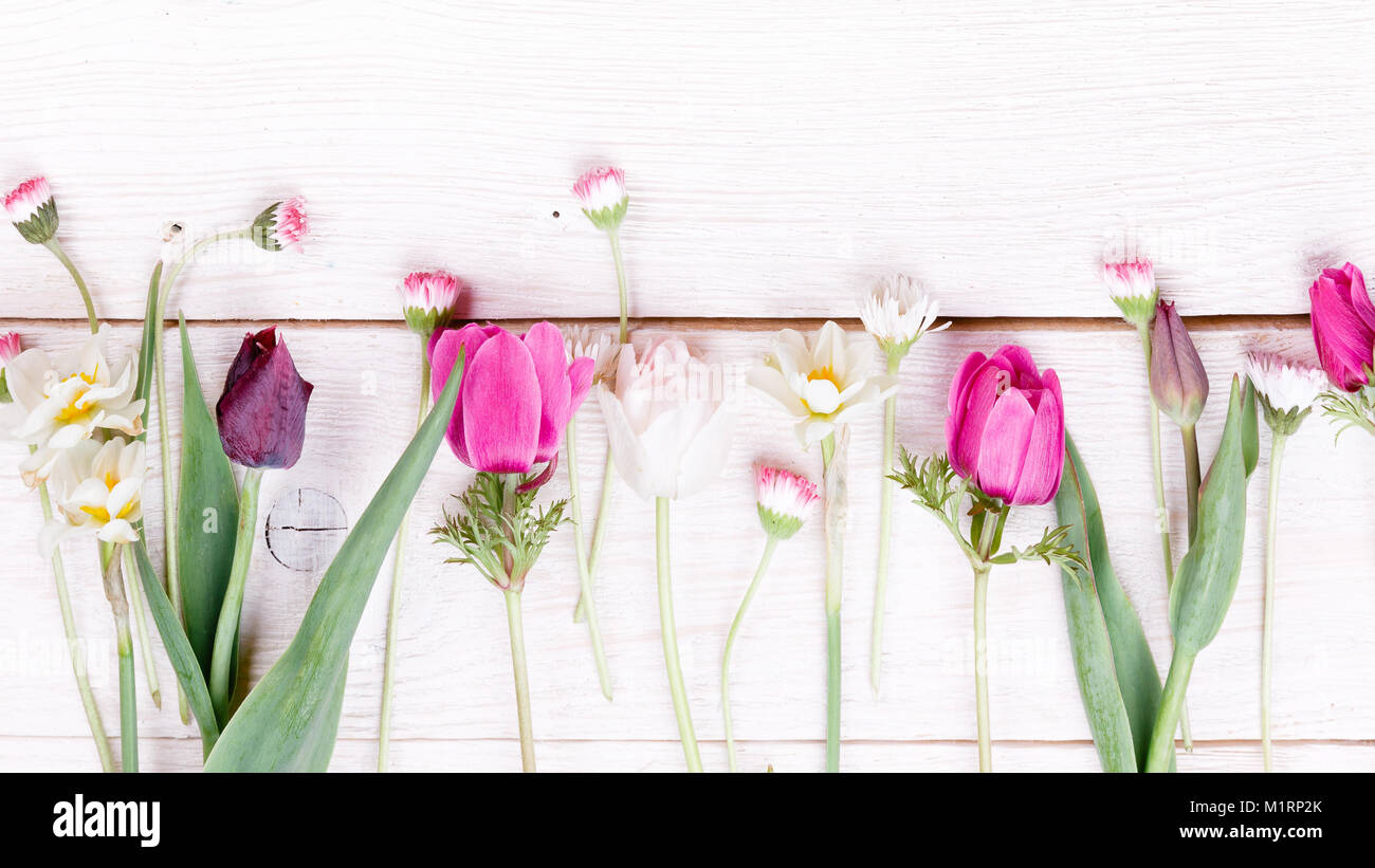 Bouquet first spring flowers pink purple tulips daffodils and bouquet first spring flowers pink purple tulips daffodils and daisies on white wooden background overhead top view flat lay easter birthday mo izmirmasajfo