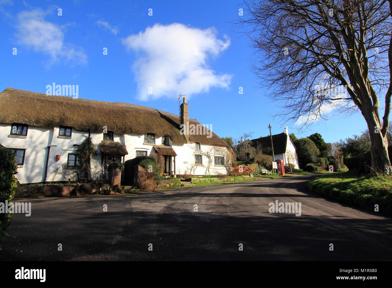 Thatched Cottages & Red Telephone Box in the Devon village of Coffinswell Southwest England - Stock Image
