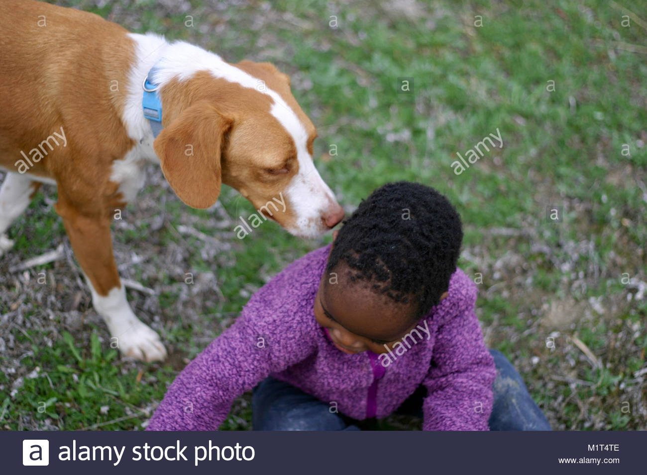 Young boy sitting on grass and playing in park with a dog - Stock Image