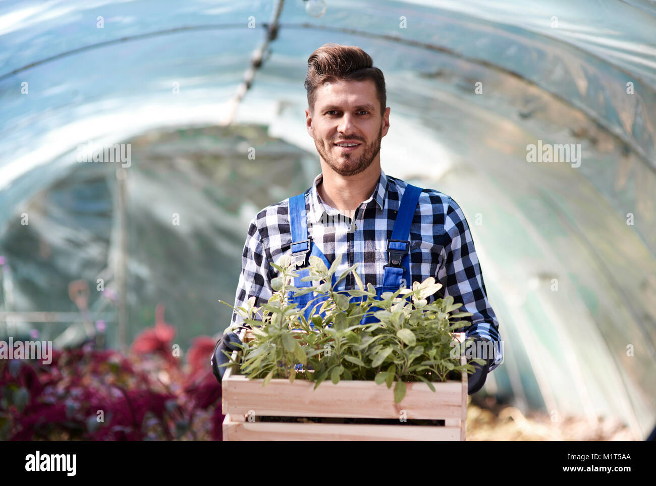 Portrait of gardener holding wooden crate with seedling Stock Photo