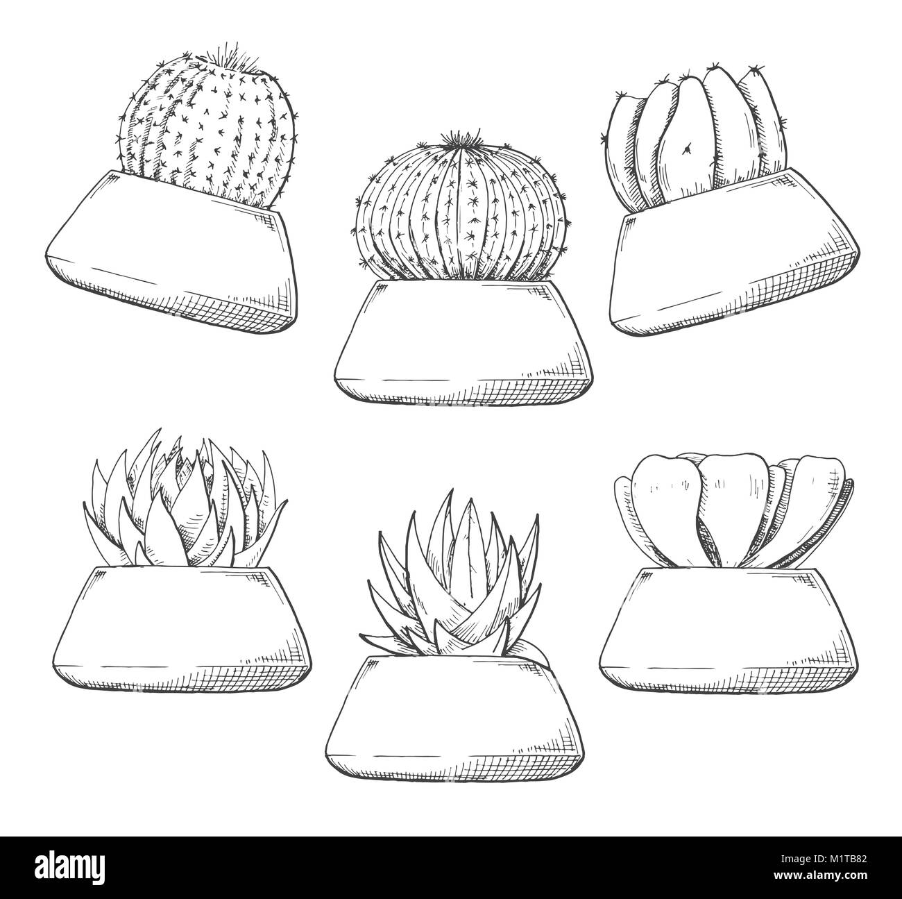 Sketch Of Succulents In Pots Vector Illustration Of A Sketch Style Stock Vector Image Art Alamy
