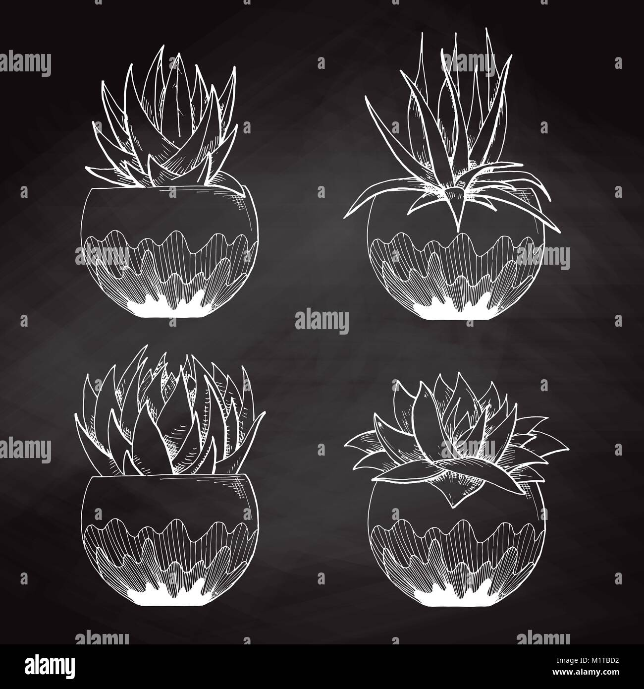 Sketch Succulents In Pots Isolated On The Chalkboard Vector Stock Vector Image Art Alamy