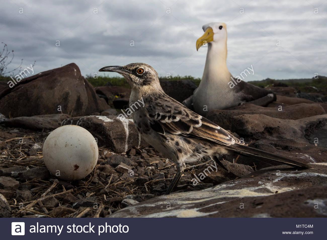 Espanola Island, Galapagos Islands. - Stock Image