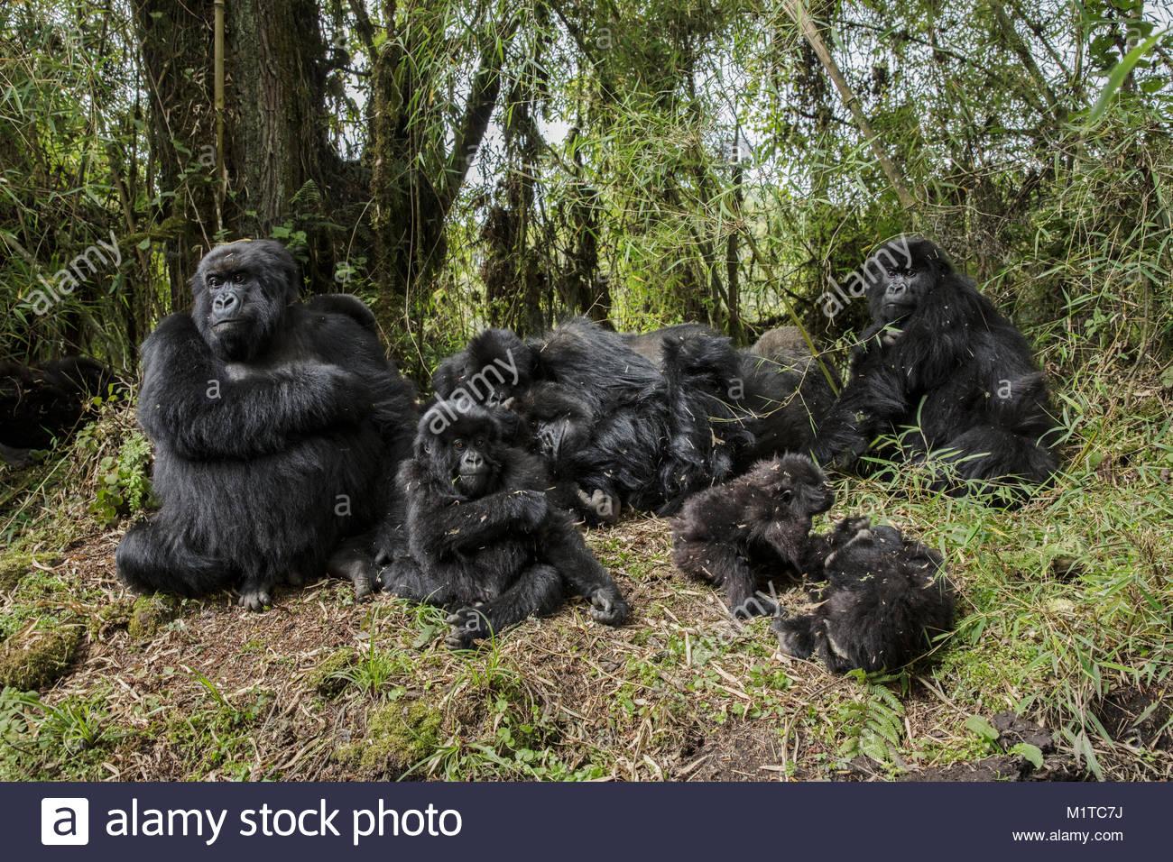 Rwanda. - Stock Image