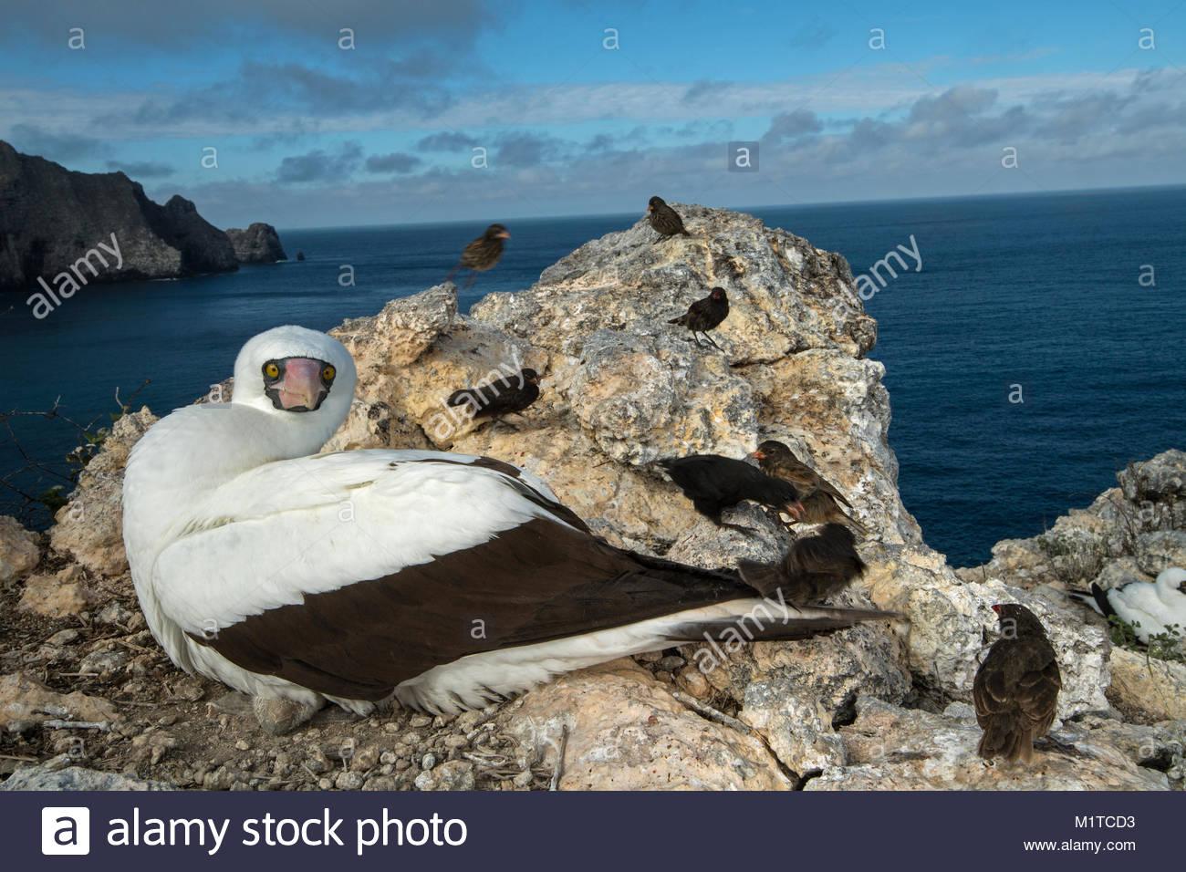 Wolf Island, Galapagos Islands. - Stock Image