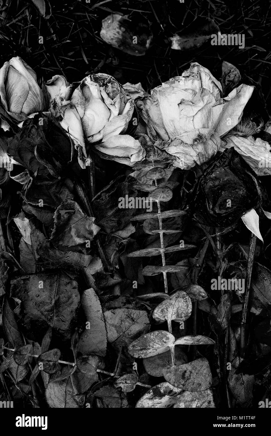 Dying Bunch Of Flowers Black And White Stock Photos Images Alamy
