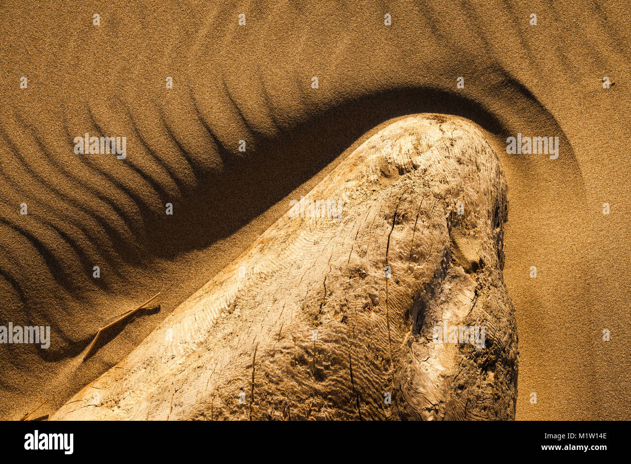 sidelit details of a sandy beach and driftwood - Stock Image